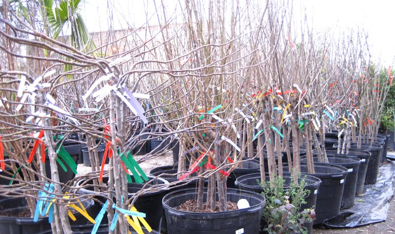 save space in your yard and get great variety with these fruit trees